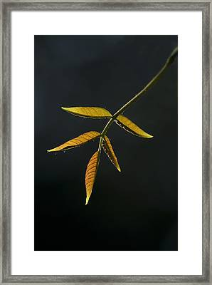 Emergence Framed Print by Yulia Kazansky
