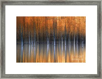 Emerging Beauties Reflected Framed Print by Marco Crupi