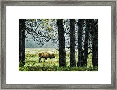 Emerging From The Fog Framed Print
