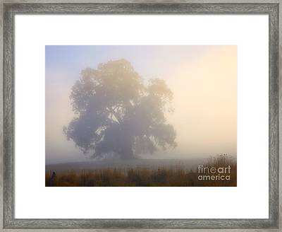 Emerging Framed Print by Mike  Dawson