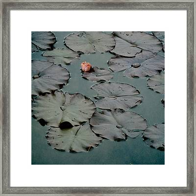 Framed Print featuring the photograph Emerging by Sally Banfill