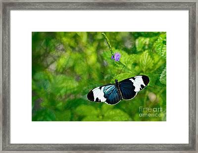Emmanuale Framed Print by Floyd Menezes