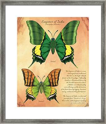 Emperor Of India Butterfly Framed Print by Tammy Yee