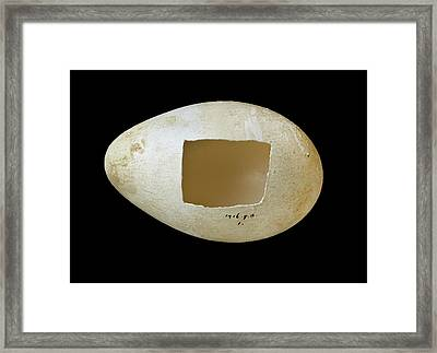 Emperor Penguin Egg Framed Print