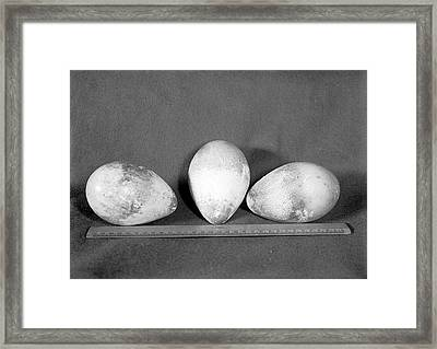 Emperor Penguin Eggs Framed Print