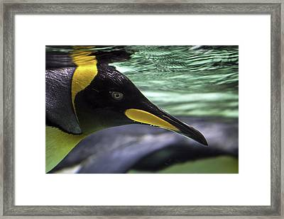 King's Eye Framed Print