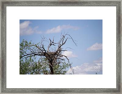 Empty Nest Syndrome Framed Print by Beverly Guilliams
