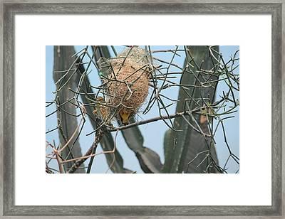 Empty Nest Syndrome Framed Print