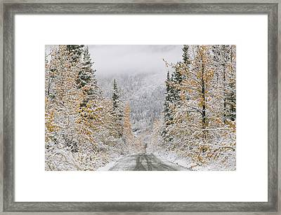 Empty Road Passing Through A Forest Framed Print by Panoramic Images