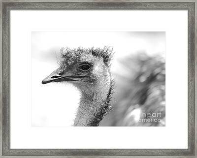 Emu - Black And White Framed Print