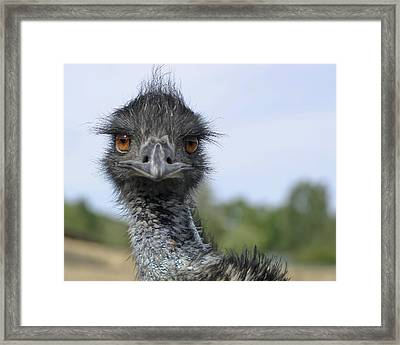 Framed Print featuring the photograph Emu Gaze by Belinda Greb
