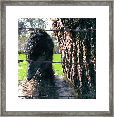 Emu Next To Tree Framed Print by Marcia Cary