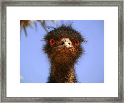 Emu Upfront Framed Print by Evelyn Tambour
