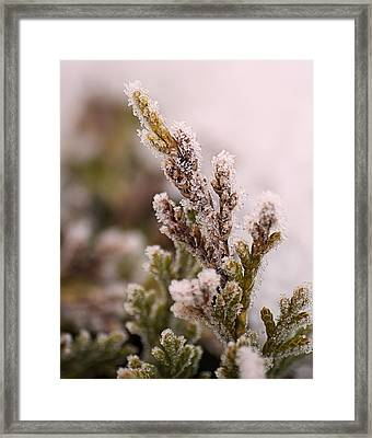 Encased In Ice Framed Print by Dave Woodbridge