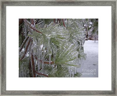 Encased In Ice Framed Print by Deborah DeLaBarre