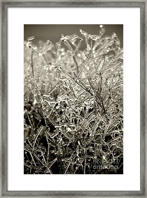 Encased In Ice IIi Framed Print by Bonnie Myszka