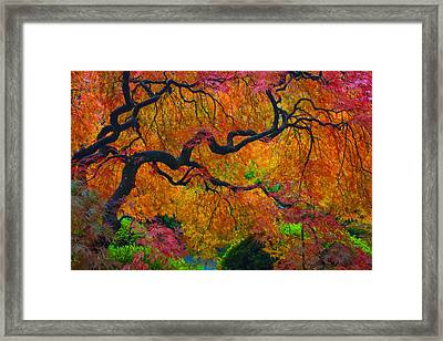 Enchanted Canopy Framed Print by Patricia Babbitt