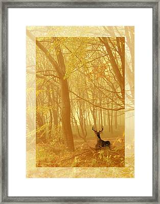 Framed Print featuring the photograph Enchanted Forest by Chris Armytage