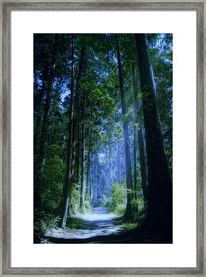 Enchanted Forest Framed Print by Claude LeTien