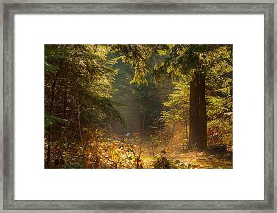 Enchanted Forest Framed Print by Evgeni Dinev
