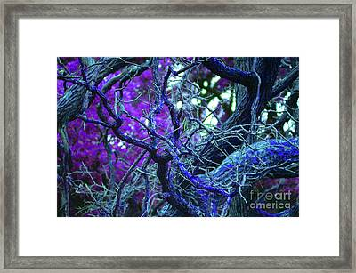 Enchanted Forest Framed Print by First Star Art
