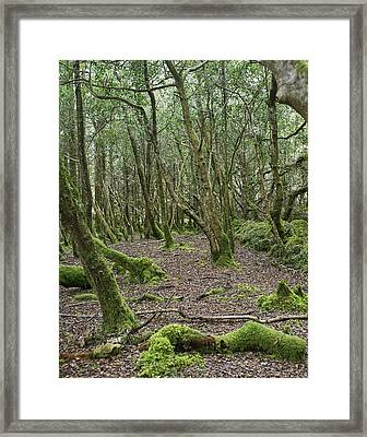 Framed Print featuring the photograph Enchanted Forest by Hugh Smith