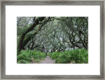 Enchanted Forest Framed Print by Laurie Perry