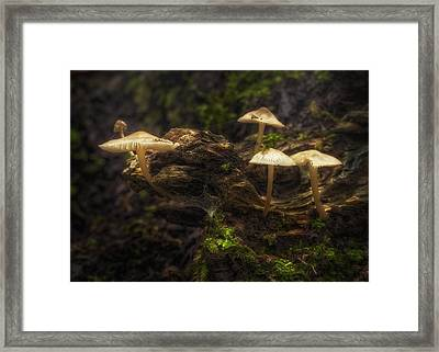Enchanted Forest Framed Print by Scott Norris