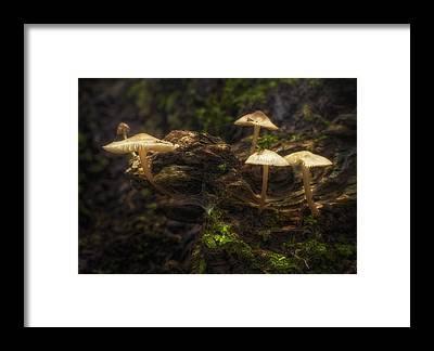 Toadstools Framed Prints