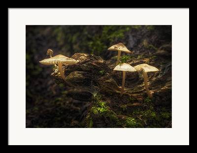 Cobwebs Framed Prints