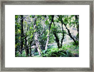 Enchanted Forest. The Kingdom Of Thetrees. Glendalough. Ireland Framed Print by Jenny Rainbow