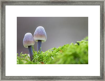 Enchanted Fungi Framed Print by Ian Hufton