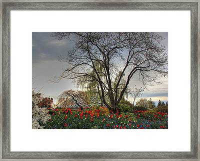 Framed Print featuring the photograph Enchanted Garden by Eti Reid