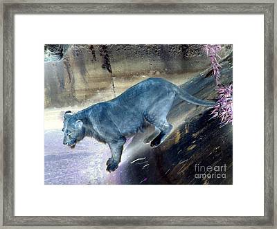 Enchanted Lioness Framed Print by Joseph Baril