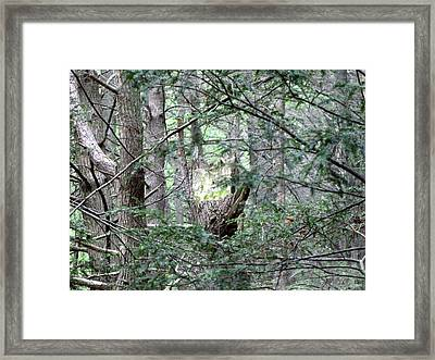 Framed Print featuring the photograph Enchanted by Melissa Stoudt