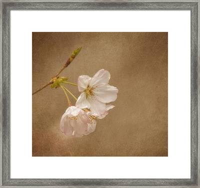 Enchanted Morning Framed Print