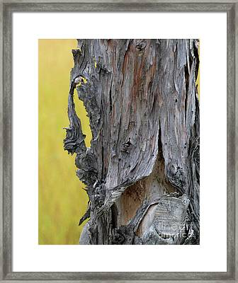 Framed Print featuring the painting Enchanted by Newel Hunter