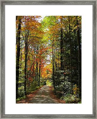 Enchanted Path Framed Print by Linda Marcille