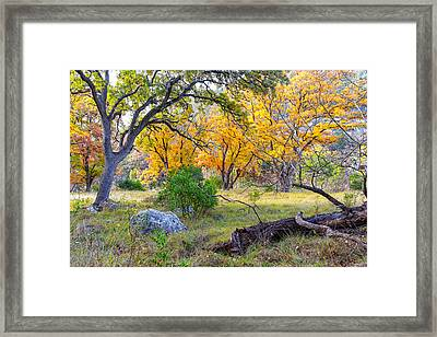 Enchanted Ruggedness Lost Maples State Natural Area - Texas Hill Country  Framed Print by Silvio Ligutti