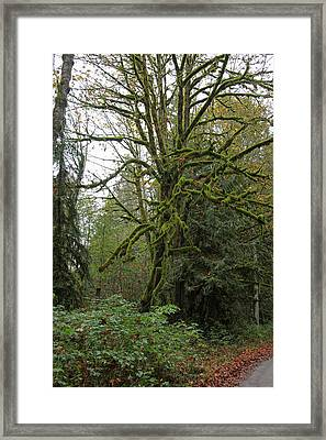 Enchanted Tree Framed Print