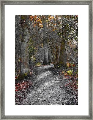 Enchanted Woods Framed Print by Linsey Williams