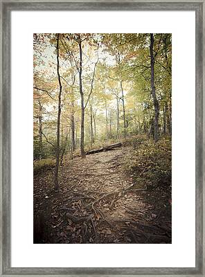 Enchanting Forest Framed Print by Debbie Karnes