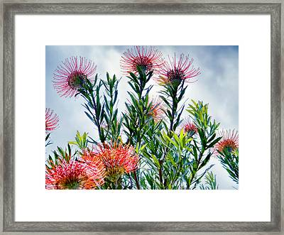 Enchanting Gardens 42 Framed Print