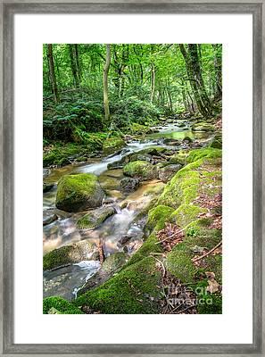 Enchanting River Framed Print