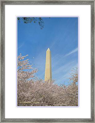 Enchanting Spring In Washington Framed Print by Sonali Gangane