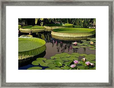 Enchanting Water Garden Framed Print by Byron Varvarigos