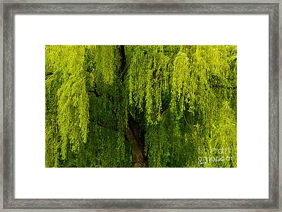 Enchanting Weeping Willow Tree  Framed Print by Carol F Austin