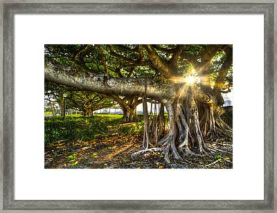 Enchantment Framed Print by Debra and Dave Vanderlaan