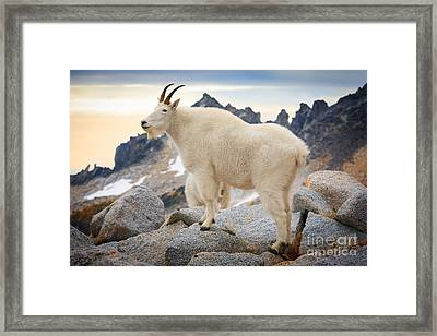 Enchantment Goat Framed Print