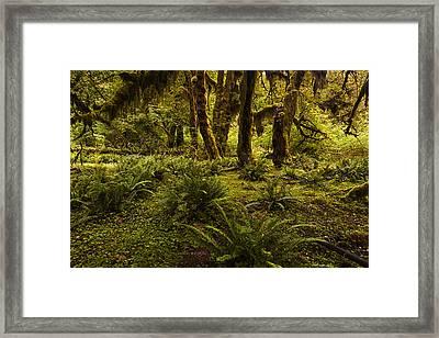 Enchantment Framed Print by Mark Kiver